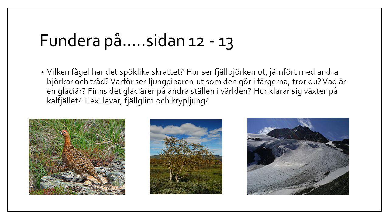 Fundera på…..sidan 12 - 13 Vilken fågel har det spöklika skrattet? Hur ser fjällbjörken ut, jämfört med andra björkar och träd? Varför ser ljungpipare