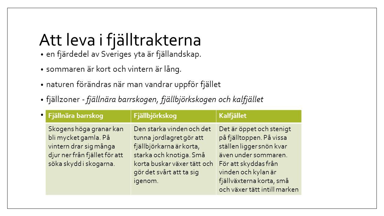 Att leva i fjälltrakterna en fjärdedel av Sveriges yta är fjällandskap. sommaren är kort och vintern är lång. naturen förändras när man vandrar uppför