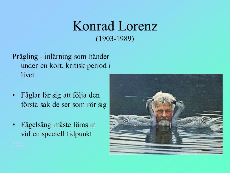 Konrad Lorenz (1903-1989) Prägling - inlärning som händer under en kort, kritisk period i livet Fåglar lär sig att följa den första sak de ser som rör