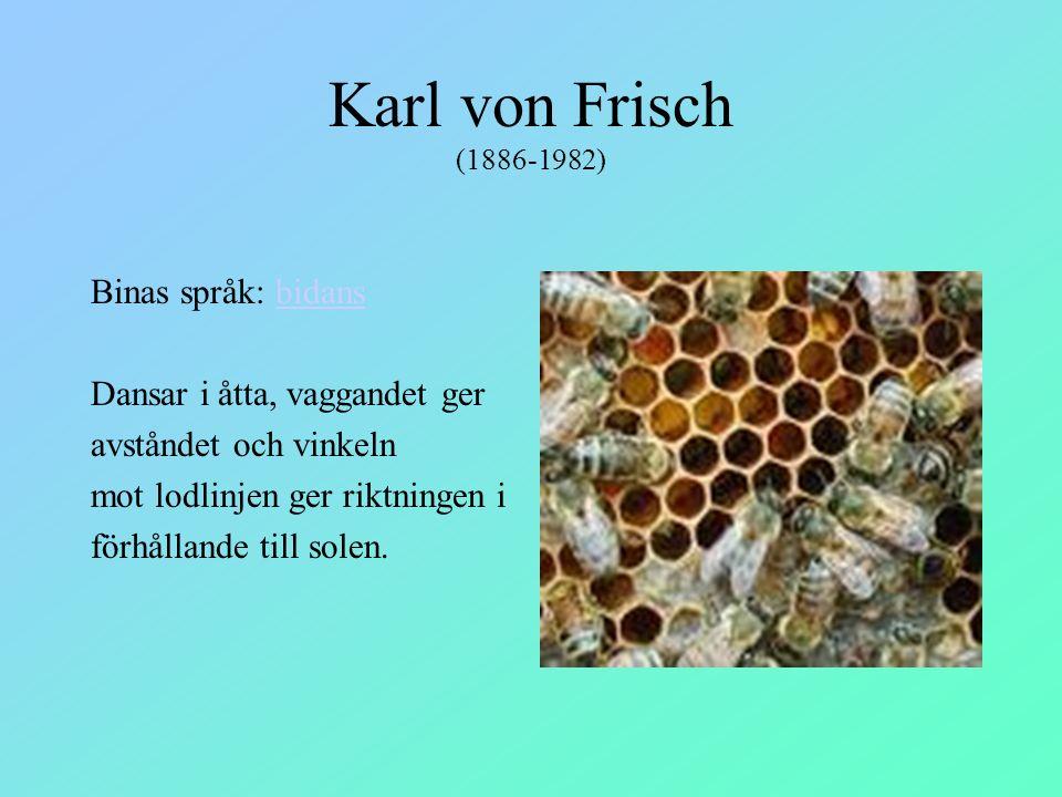 Karl von Frisch (1886-1982) Binas språk: bidansbidans Dansar i åtta, vaggandet ger avståndet och vinkeln mot lodlinjen ger riktningen i förhållande ti