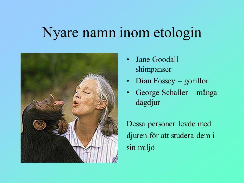 Nyare namn inom etologin Jane Goodall – shimpanser Dian Fossey – gorillor George Schaller – många dägdjur Dessa personer levde med djuren för att stud