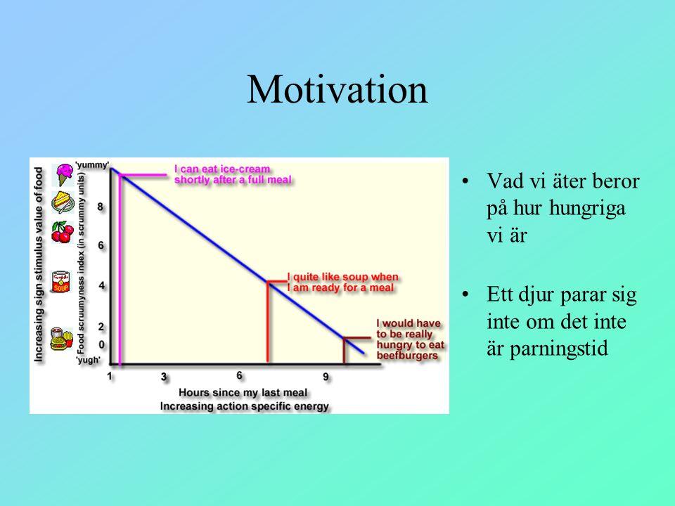 Motivation Vad vi äter beror på hur hungriga vi är Ett djur parar sig inte om det inte är parningstid