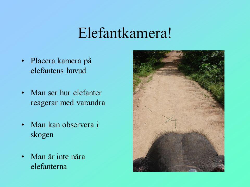 Elefantkamera! Placera kamera på elefantens huvud Man ser hur elefanter reagerar med varandra Man kan observera i skogen Man är inte nära elefanterna