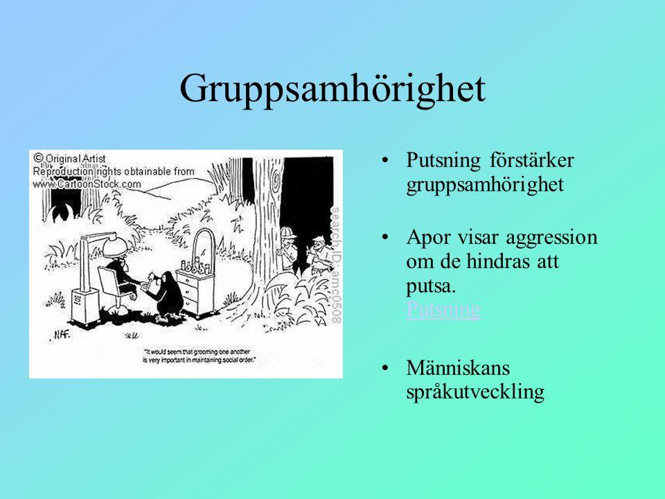 Gruppsamhörighet Putsning förstärker gruppsamhörighet Apor visar aggression om de hindras att putsa. Putsning Putsning Människans språkutveckling