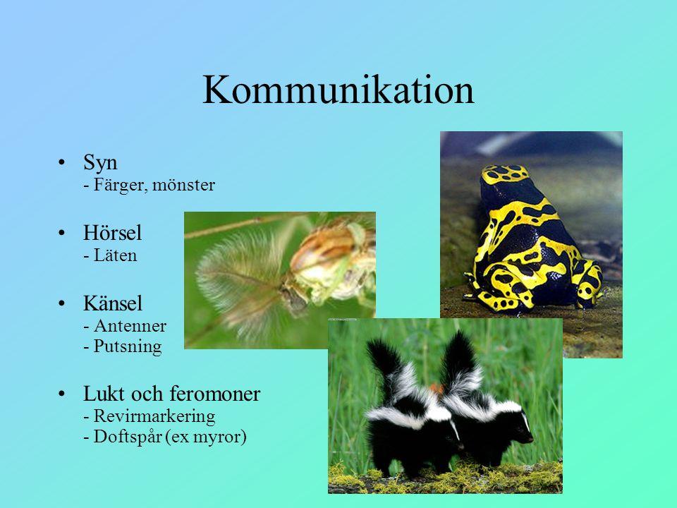 Kommunikation Syn - Färger, mönster Hörsel - Läten Känsel - Antenner - Putsning Lukt och feromoner - Revirmarkering - Doftspår (ex myror)