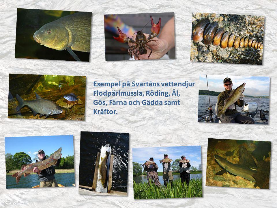 Miljöer vid Svartån att värna om Solberga naturreservat är ett stort sammanhängande ekområde.