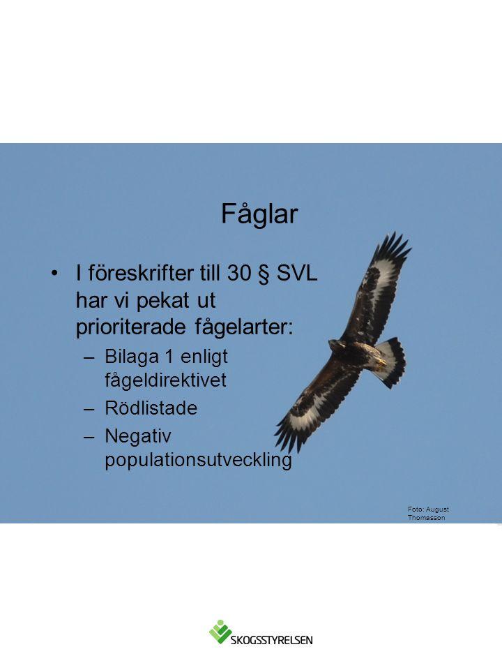 Foto: August Thomasson I föreskrifter till 30 § SVL har vi pekat ut prioriterade fågelarter: –Bilaga 1 enligt fågeldirektivet –Rödlistade –Negativ populationsutveckling Fåglar