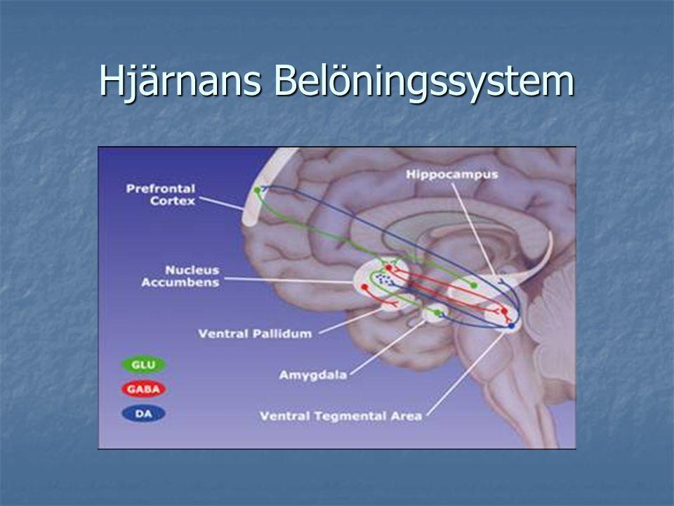 Hjärnans Belöningssystem