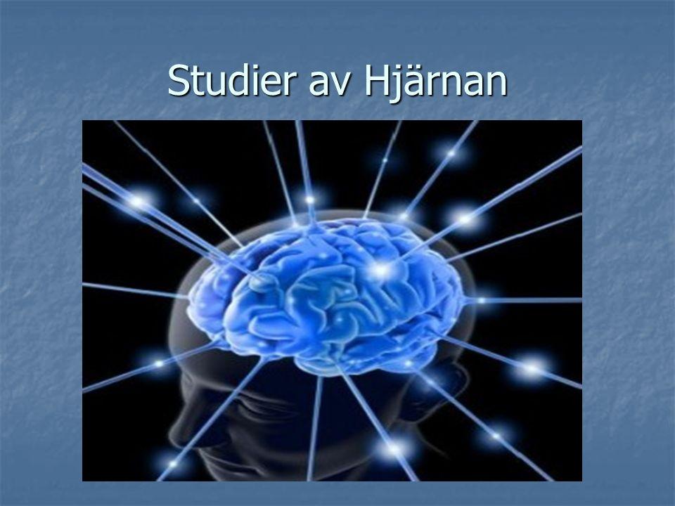 Studier av Hjärnan