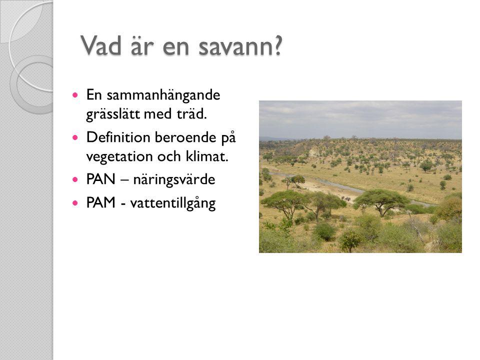 Vad är en savann. En sammanhängande grässlätt med träd.