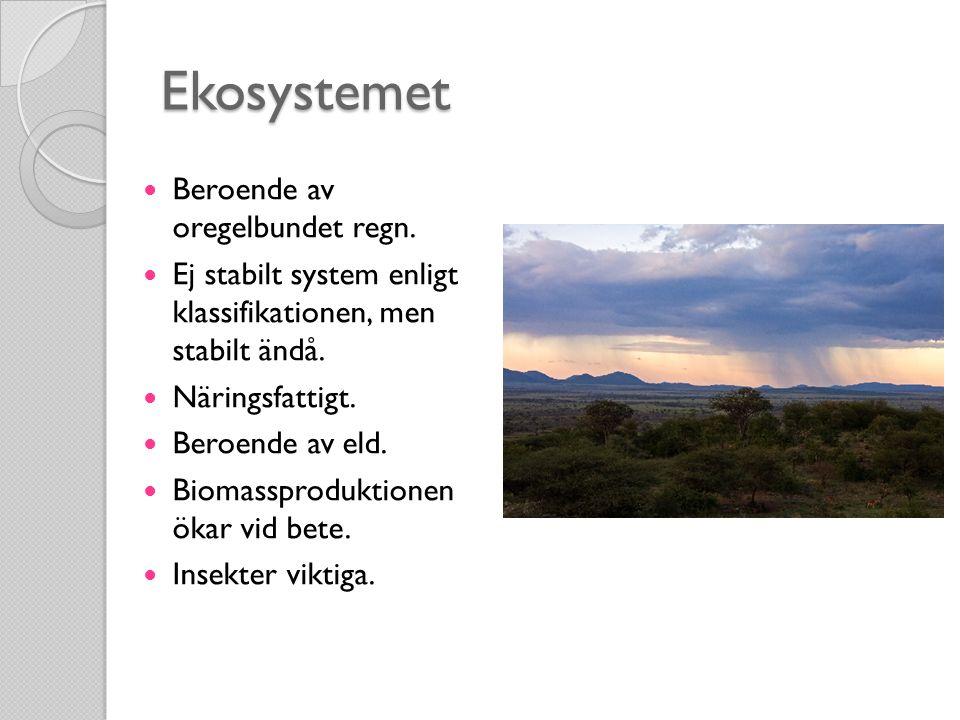 Ekosystemet Beroende av oregelbundet regn.
