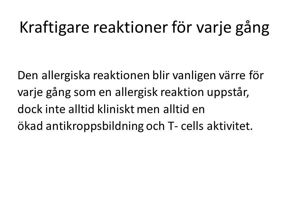 Kraftigare reaktioner för varje gång Den allergiska reaktionen blir vanligen värre för varje gång som en allergisk reaktion uppstår, dock inte alltid kliniskt men alltid en ökad antikroppsbildning och T- cells aktivitet.