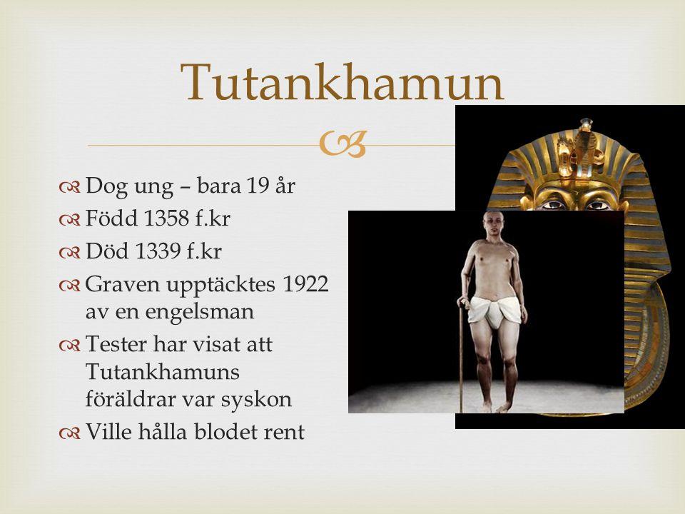  Tutankhamun  Dog ung – bara 19 år  Född 1358 f.kr  Död 1339 f.kr  Graven upptäcktes 1922 av en engelsman  Tester har visat att Tutankhamuns för