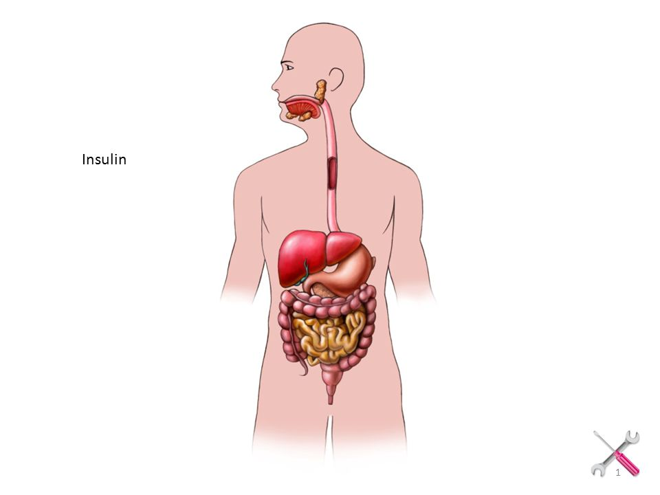 Insulin Copyright Louise Edlund Insulin 1