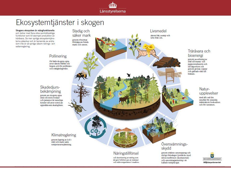 Projekt ekosystemtjänster Uppdragsgivare: RUS & Skogsstyrelsen Tid: 1 mars 2015 – 29 februari 2016 Omfattning: 20 % Organisation: som ett vanligt projekt