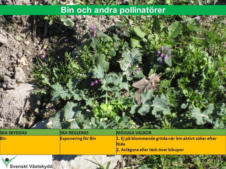 Bin och andra pollinatörer SKA SKYDDASSKA REGLERASMÖJLIGA VILLKOR BinExponering för Bin1.