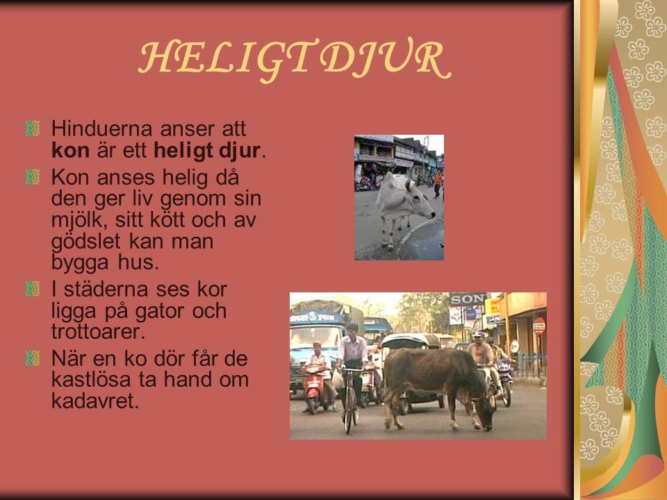 HELIGT DJUR Hinduerna anser att kon är ett heligt djur. Kon anses helig då den ger liv genom sin mjölk, sitt kött och av gödslet kan man bygga hus. I