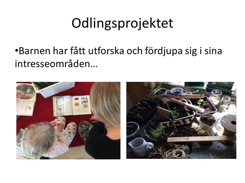 Odlingsprojektet Barnen har fått utforska och fördjupa sig i sina intresseområden…