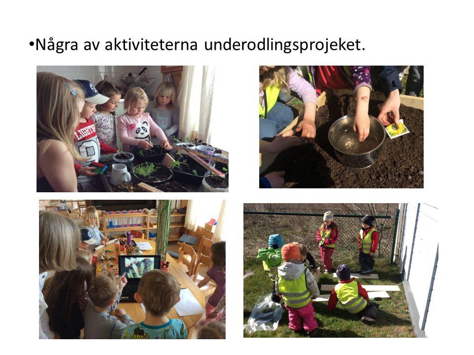 Några av aktiviteterna underodlingsprojeket.