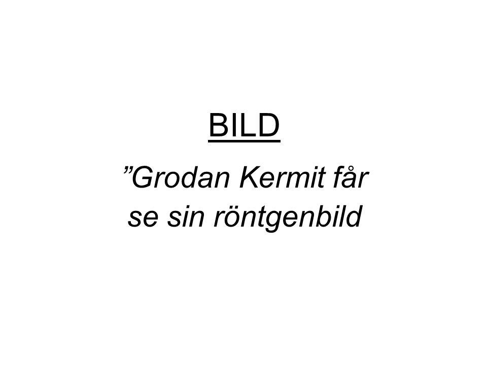 "BILD ""Grodan Kermit får se sin röntgenbild"