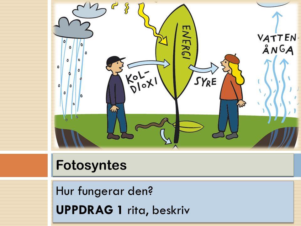 Hur fungerar den? UPPDRAG 1 rita, beskriv Hur fungerar den? UPPDRAG 1 rita, beskriv Fotosyntes