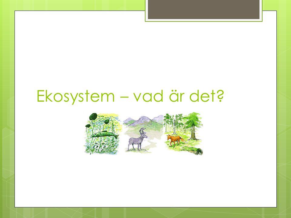 Ekosystem – vad är det