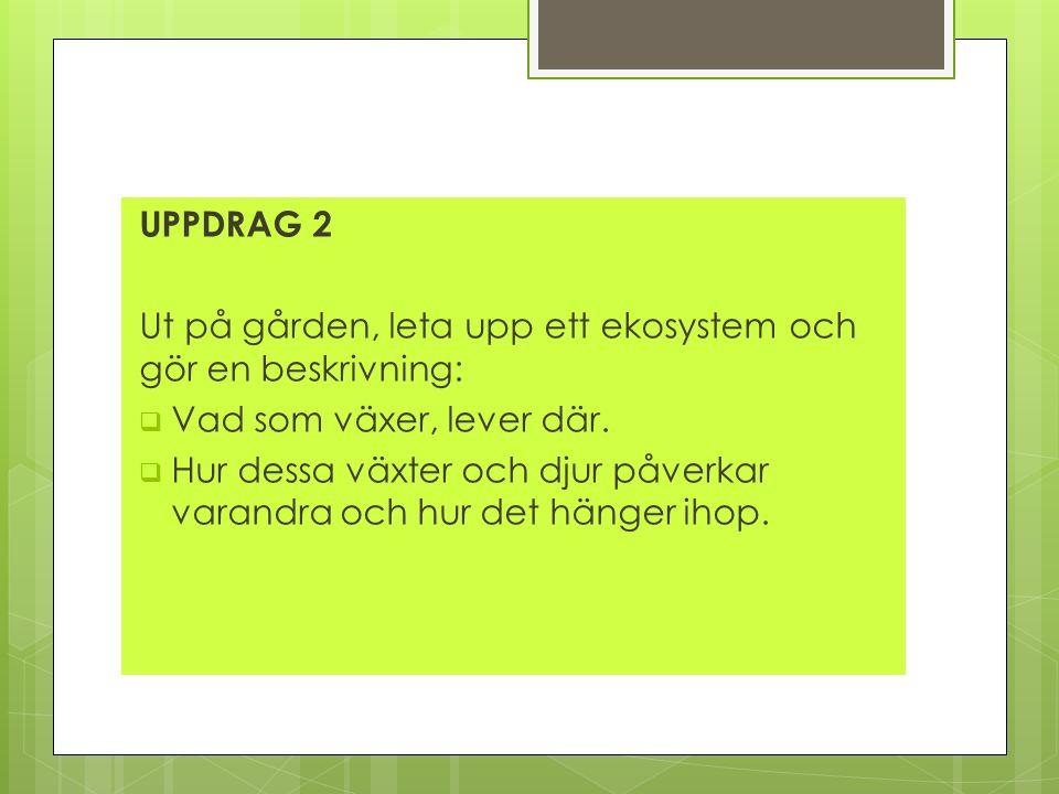 UPPDRAG 2 Ut på gården, leta upp ett ekosystem och gör en beskrivning:  Vad som växer, lever där.  Hur dessa växter och djur påverkar varandra och h
