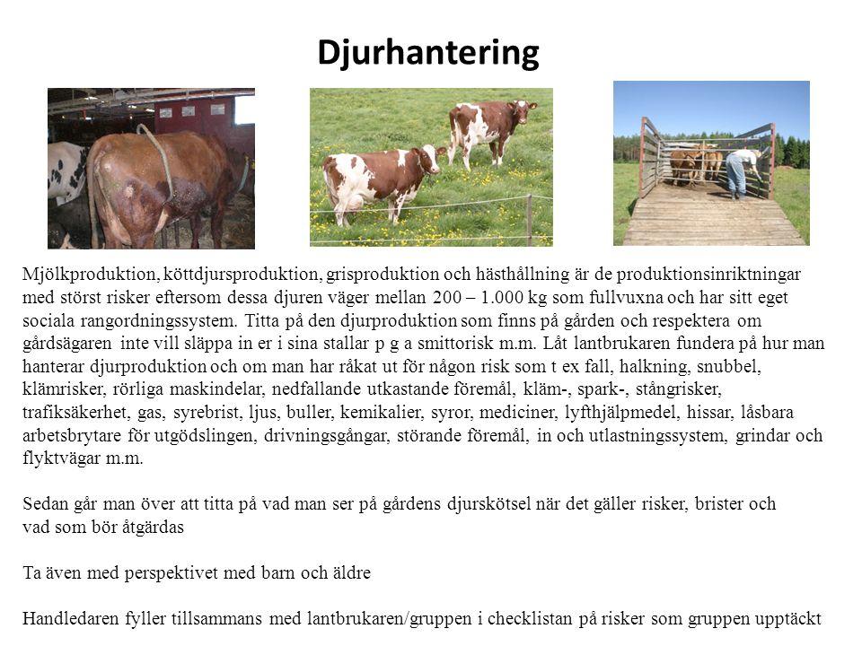 Djurhantering Mjölkproduktion, köttdjursproduktion, grisproduktion och hästhållning är de produktionsinriktningar med störst risker eftersom dessa djuren väger mellan 200 – 1.000 kg som fullvuxna och har sitt eget sociala rangordningssystem.