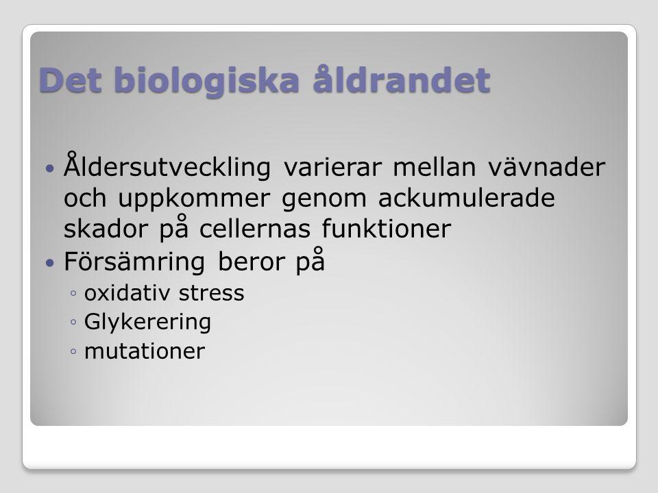 Det biologiska åldrandet Åldersutveckling varierar mellan vävnader och uppkommer genom ackumulerade skador på cellernas funktioner Försämring beror på ◦oxidativ stress ◦Glykerering ◦mutationer