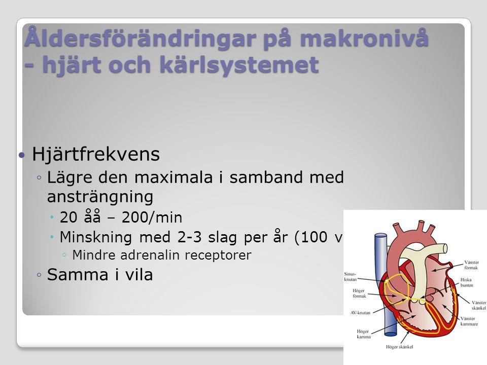 Åldersförändringar på makronivå - hjärt och kärlsystemet Hjärtfrekvens ◦Lägre den maximala i samband med ansträngning  20 åå – 200/min  Minskning med 2-3 slag per år (100 vid 70 åå) ◦ Mindre adrenalin receptorer ◦Samma i vila
