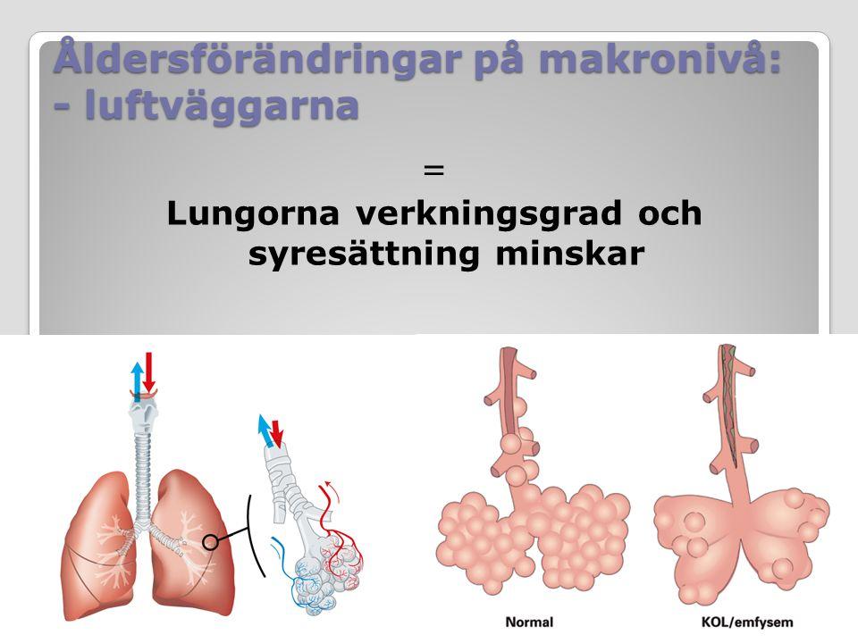 Åldersförändringar på makronivå: - luftväggarna = Lungorna verkningsgrad och syresättning minskar