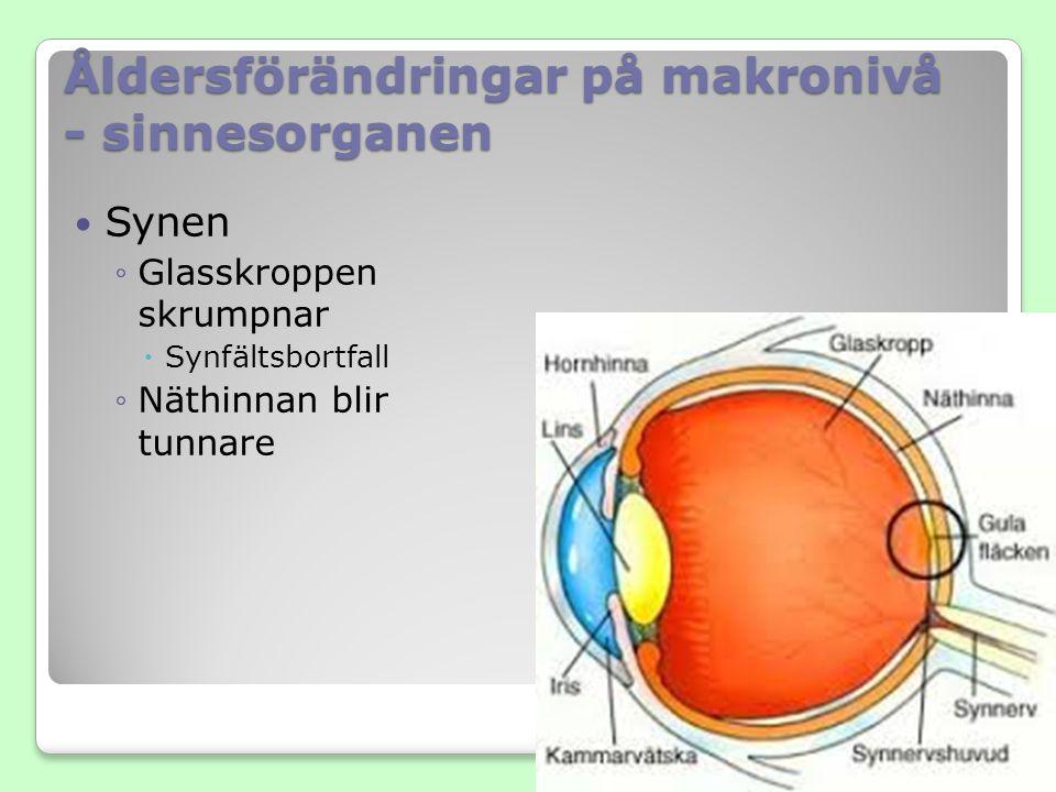 Åldersförändringar på makronivå - sinnesorganen Synen ◦Glasskroppen skrumpnar  Synfältsbortfall ◦Näthinnan blir tunnare