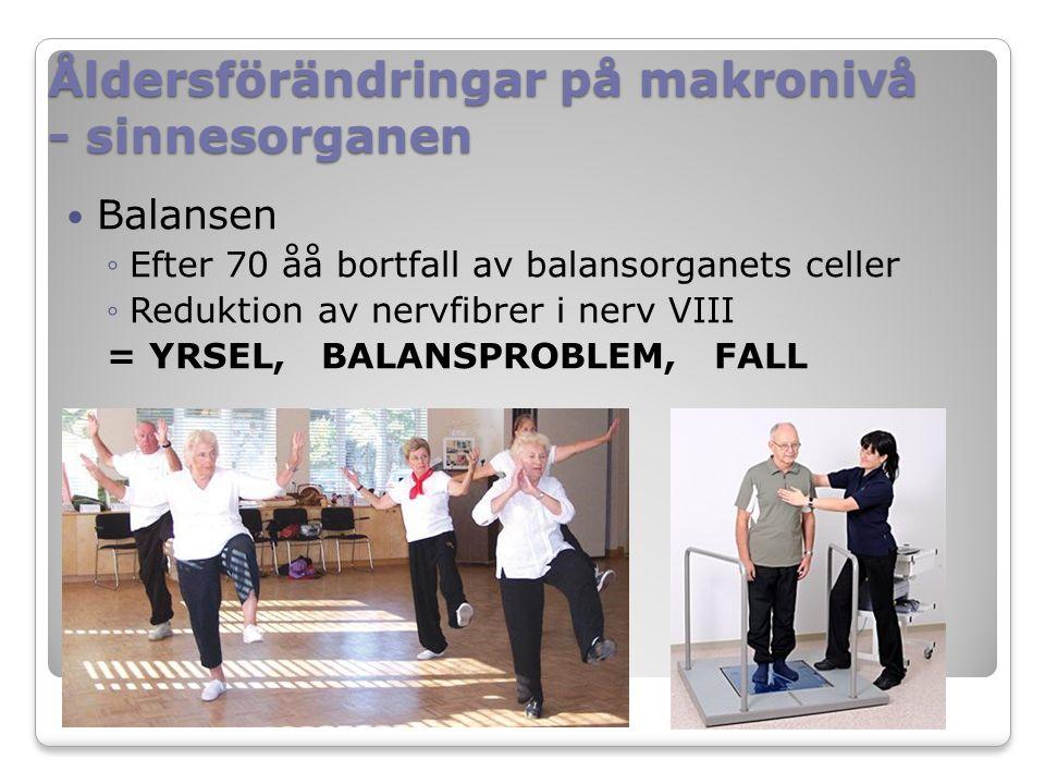Åldersförändringar på makronivå - sinnesorganen Balansen ◦Efter 70 åå bortfall av balansorganets celler ◦Reduktion av nervfibrer i nerv VIII = YRSEL, BALANSPROBLEM, FALL