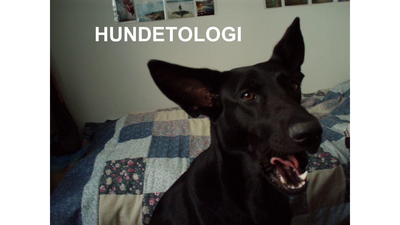 Hunden är den mest variabla arten på jorden Storlek, färg, form, beteende.