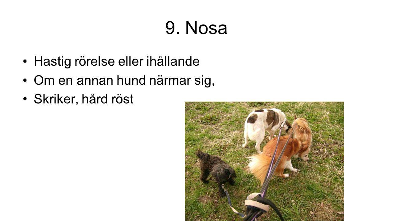 9. Nosa Hastig rörelse eller ihållande Om en annan hund närmar sig, Skriker, hård röst