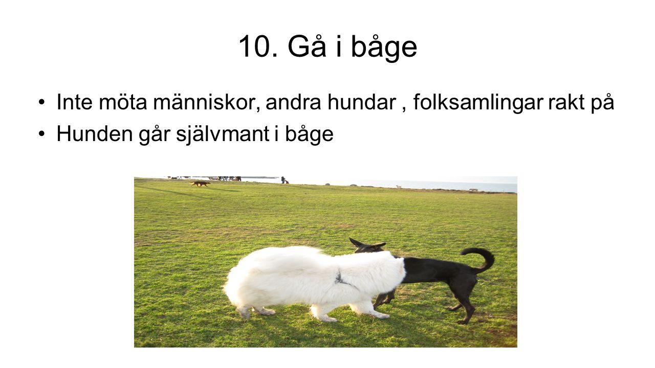 10. Gå i båge Inte möta människor, andra hundar, folksamlingar rakt på Hunden går självmant i båge