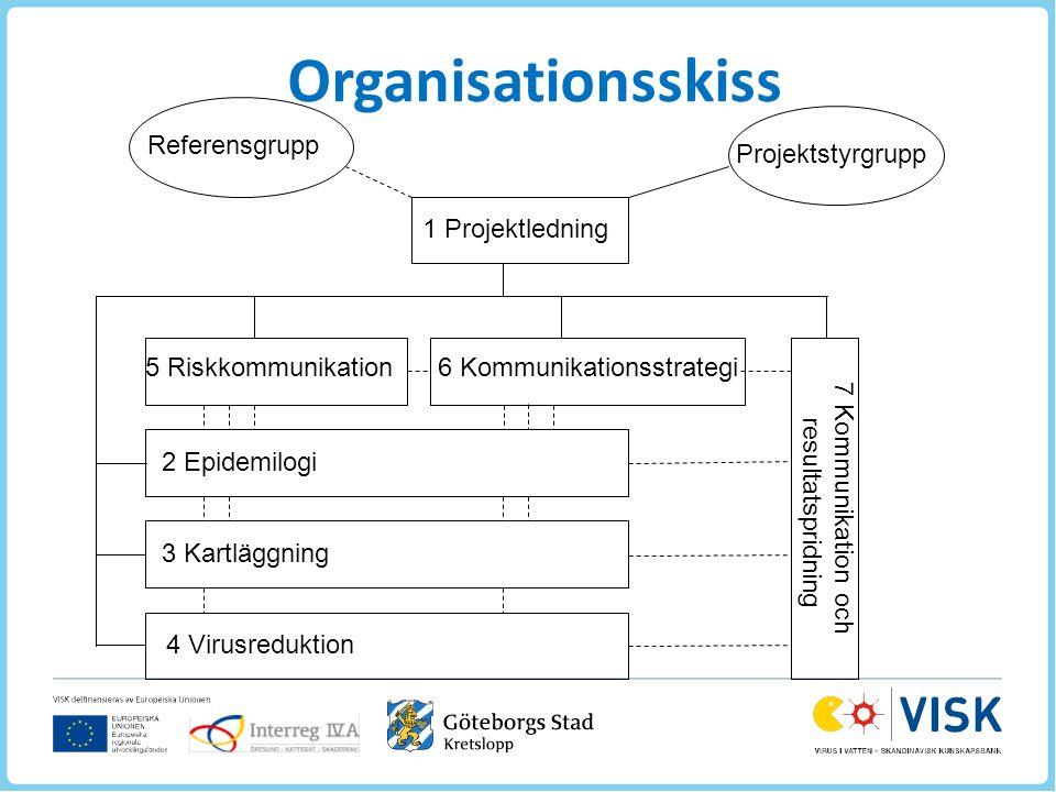 1 Projektledning Projektstyrgrupp Referensgrupp 5 Riskkommunikation6 Kommunikationsstrategi 2 Epidemilogi 3 Kartläggning 4 Virusreduktion 7 Kommunikation och resultatspridning Organisationsskiss