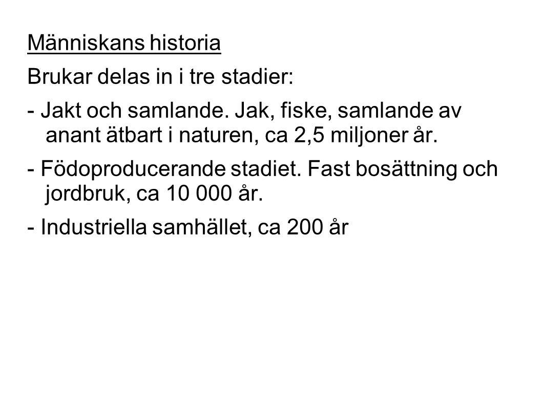 Människans historia Brukar delas in i tre stadier: - Jakt och samlande.