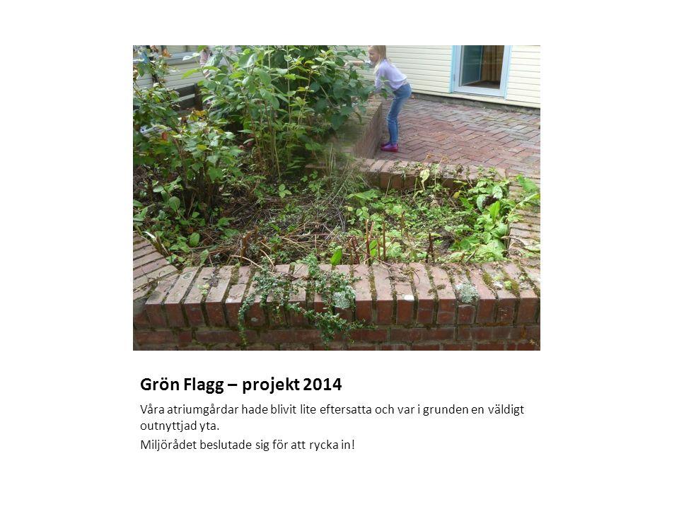 Grön Flagg – projekt 2014 Våra atriumgårdar hade blivit lite eftersatta och var i grunden en väldigt outnyttjad yta.