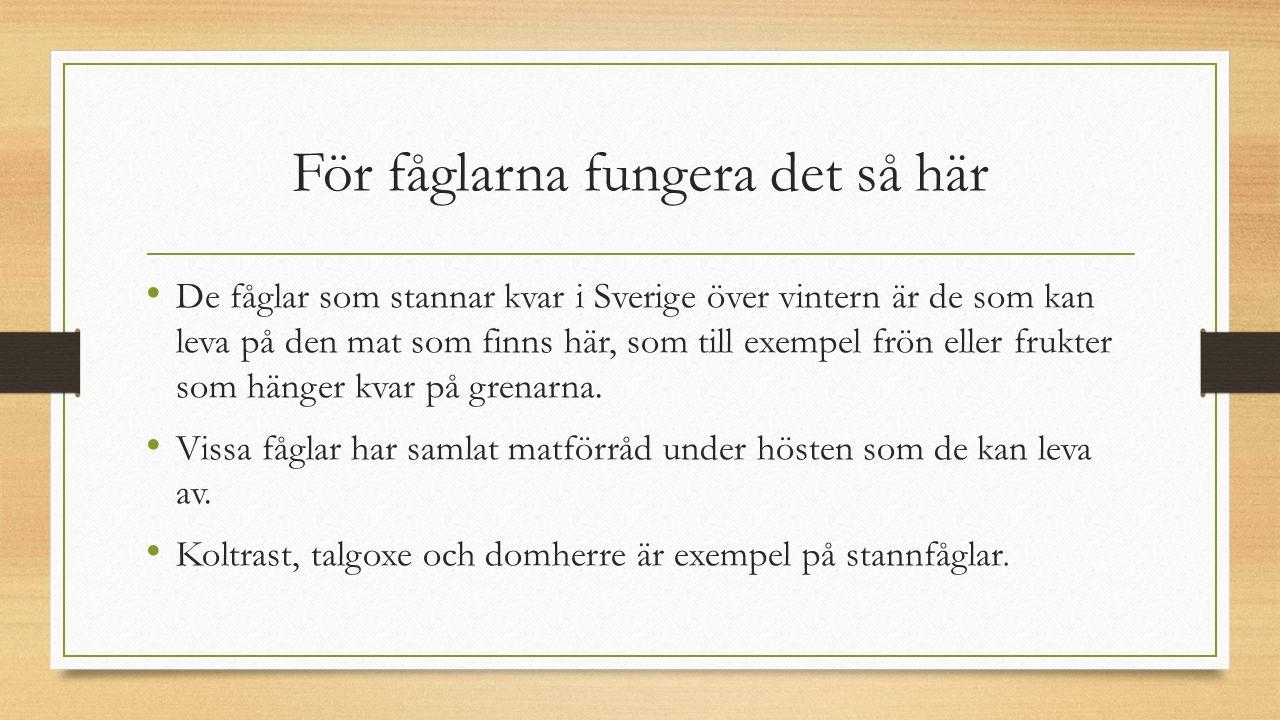 För fåglarna fungera det så här De fåglar som stannar kvar i Sverige över vintern är de som kan leva på den mat som finns här, som till exempel frön e