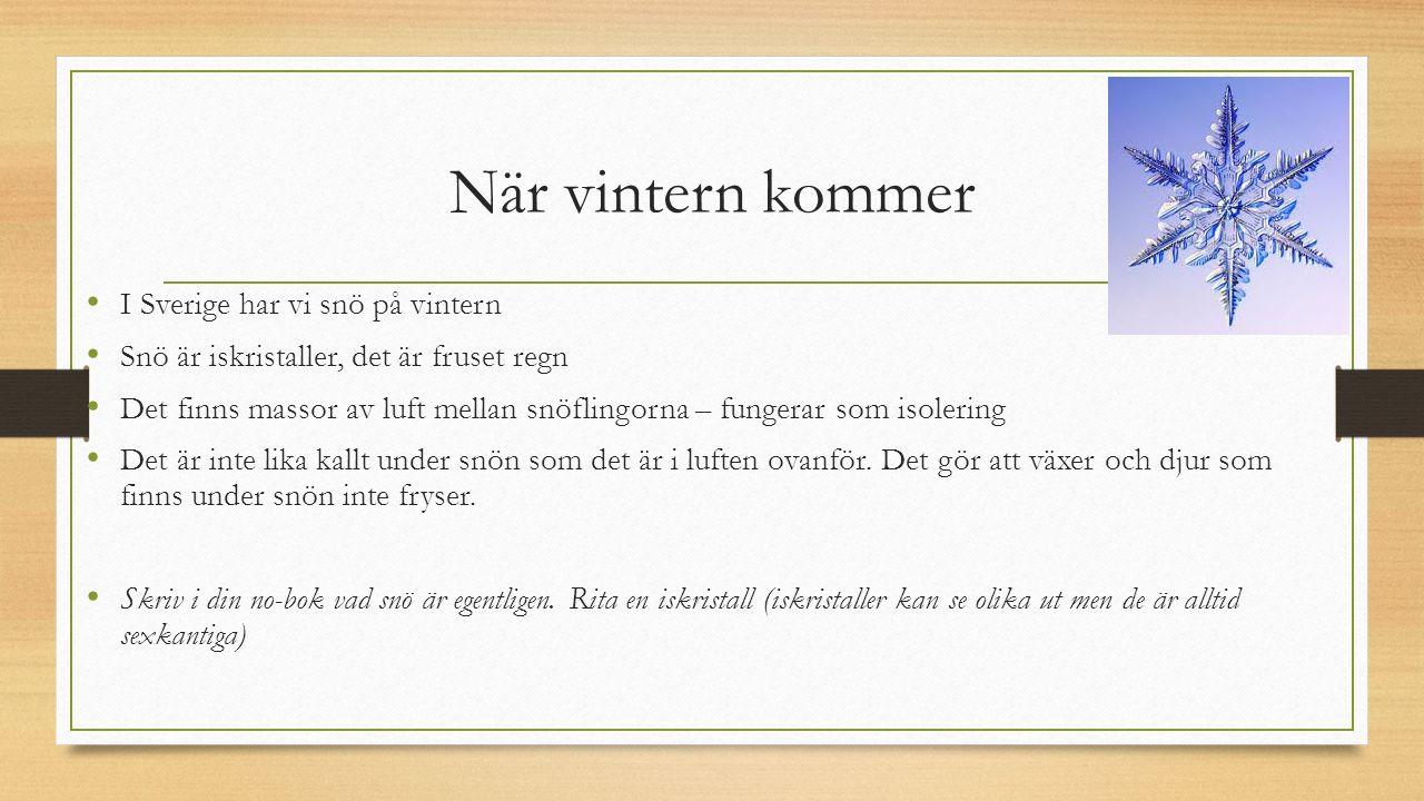 När vintern kommer I Sverige har vi snö på vintern Snö är iskristaller, det är fruset regn Det finns massor av luft mellan snöflingorna – fungerar som