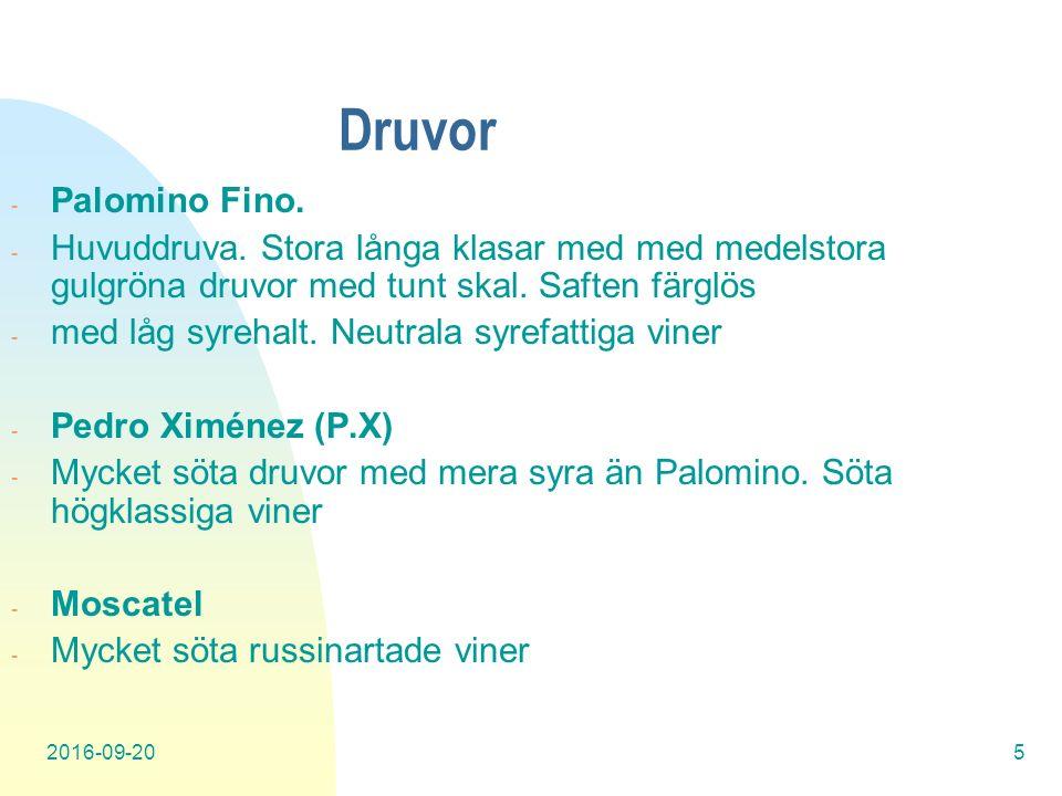 2016-09-205 Druvor - Palomino Fino. - Huvuddruva.