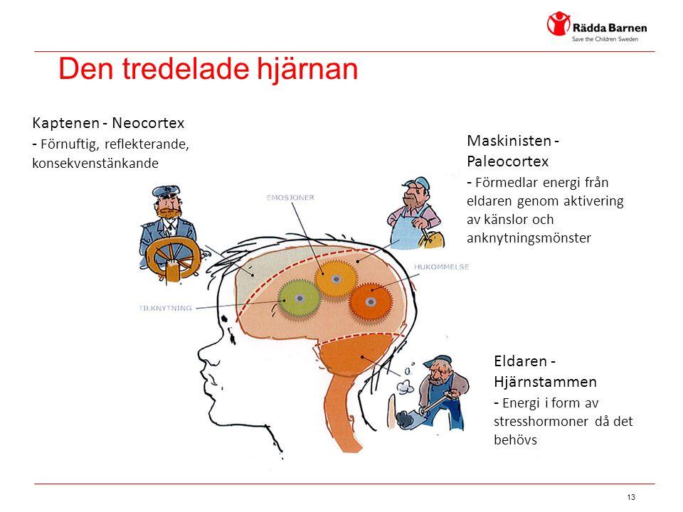 13 Kaptenen - Neocortex - Förnuftig, reflekterande, konsekvenstänkande Maskinisten - Paleocortex - Förmedlar energi från eldaren genom aktivering av känslor och anknytningsmönster Eldaren - Hjärnstammen - Energi i form av stresshormoner då det behövs Den tredelade hjärnan