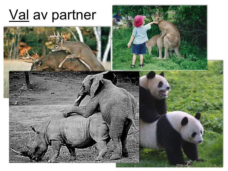 Val av partner