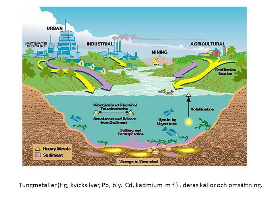 Tungmetaller (Hg, kvicksilver, Pb, bly, Cd, kadmium m fl), deras källor och omsättning.