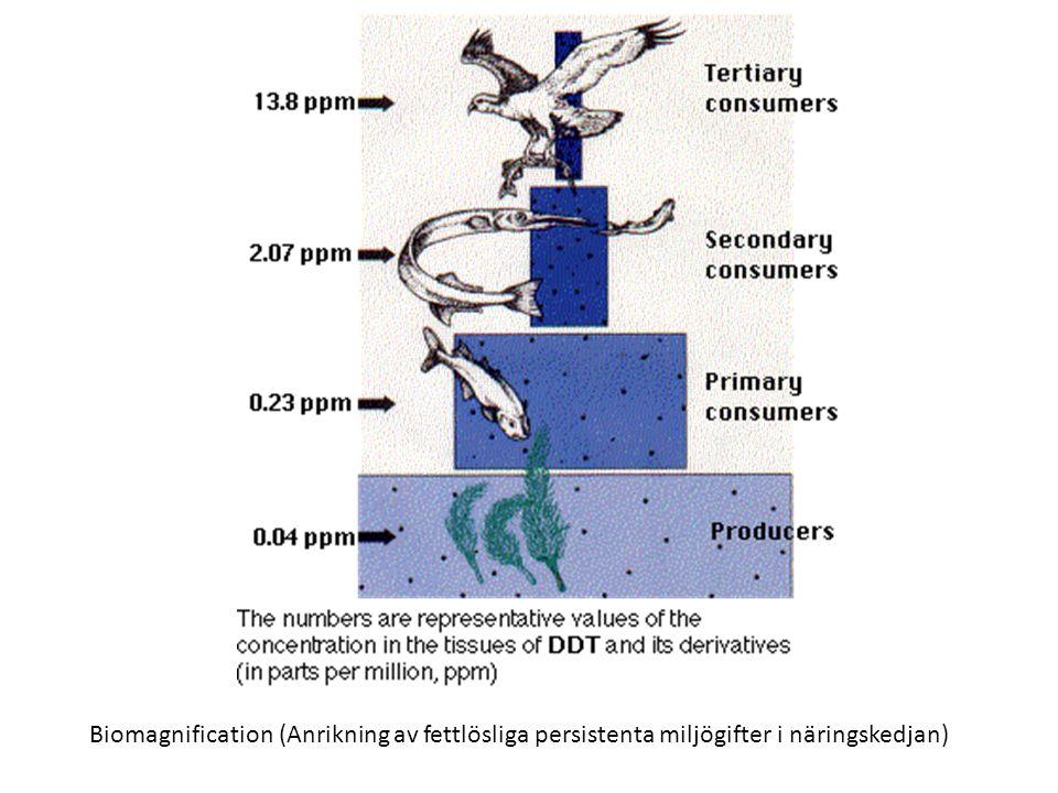 Biomagnification (Anrikning av fettlösliga persistenta miljögifter i näringskedjan)