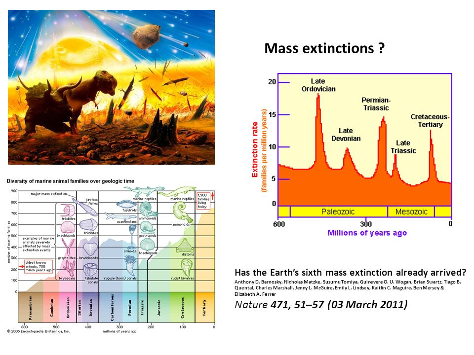 Mass extinctions ? Has the Earth's sixth mass extinction already arrived? Anthony D. Barnosky, Nicholas Matzke, Susumu Tomiya, Guinevere O. U. Wogan,
