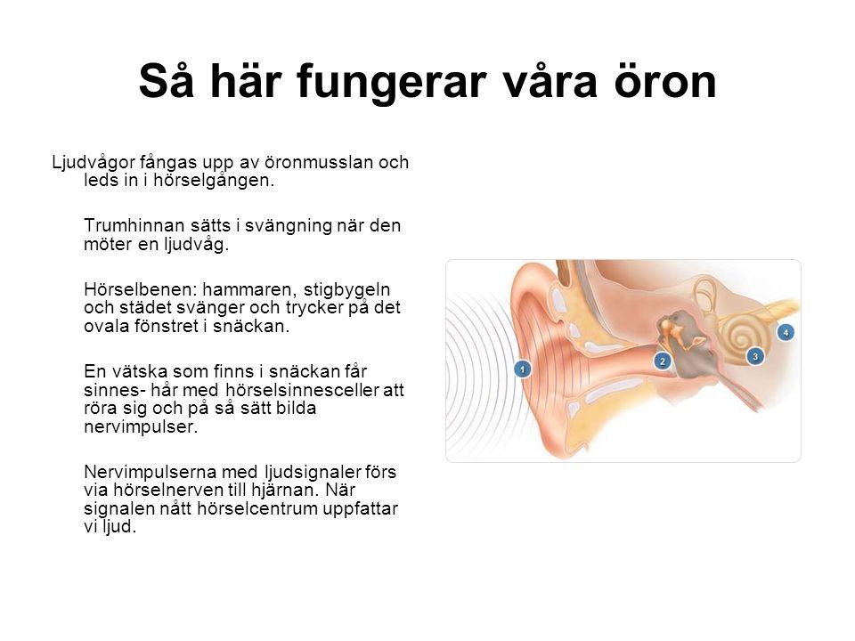 Så här fungerar våra öron Ljudvågor fångas upp av öronmusslan och leds in i hörselgången.
