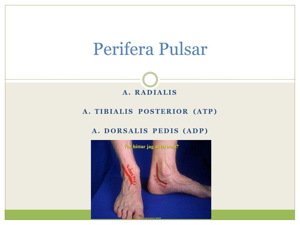 A. RADIALIS A. TIBIALIS POSTERIOR (ATP) A. DORSALIS PEDIS (ADP) Perifera Pulsar