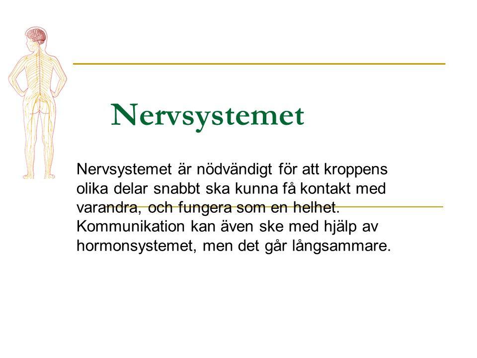 Nervsystemet Nervsystemet är nödvändigt för att kroppens olika delar snabbt ska kunna få kontakt med varandra, och fungera som en helhet.